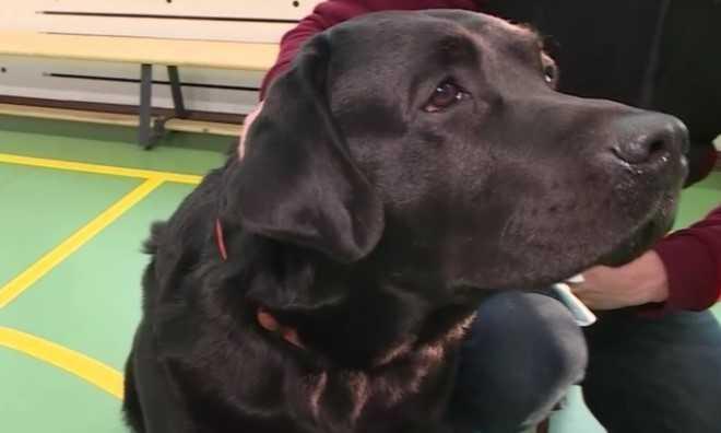 Лукас XIII Великолепный из Петербурга стал лучшей собакой-терапевтом России