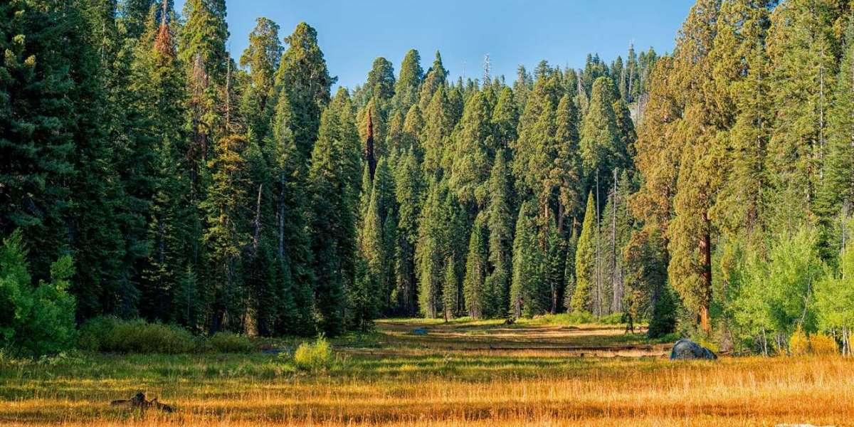Тотальная вырубка деревьев уродует Приморский район Петербурга