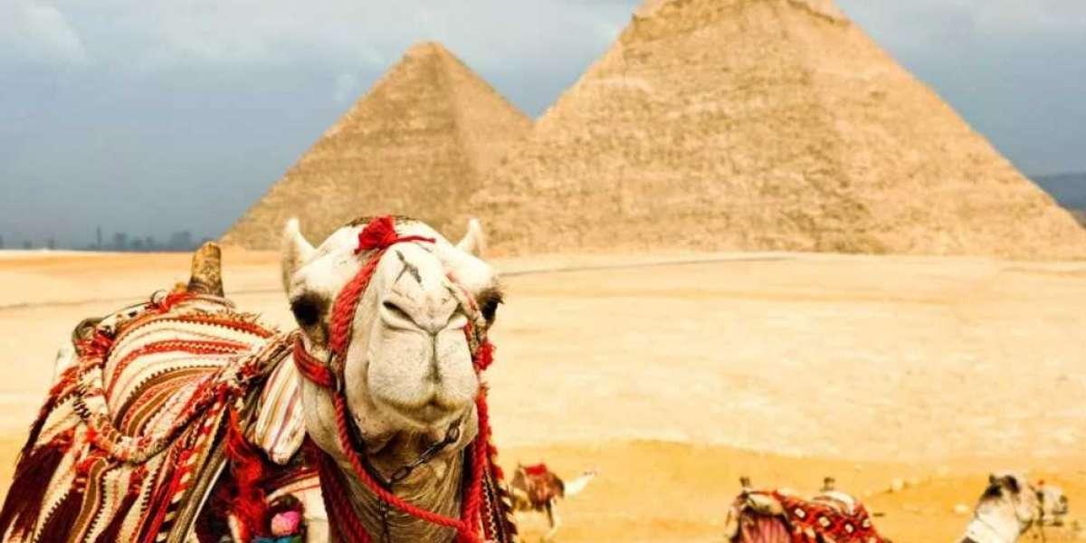 Авиакомпания EgyptAir запустила семь рейсов между Москвой и Египтом