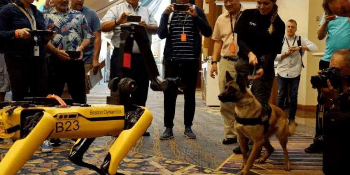 Робопсы Boston Dynamics на прогулке