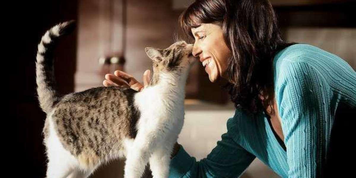 Кошка,человек и их друг - Эволюция