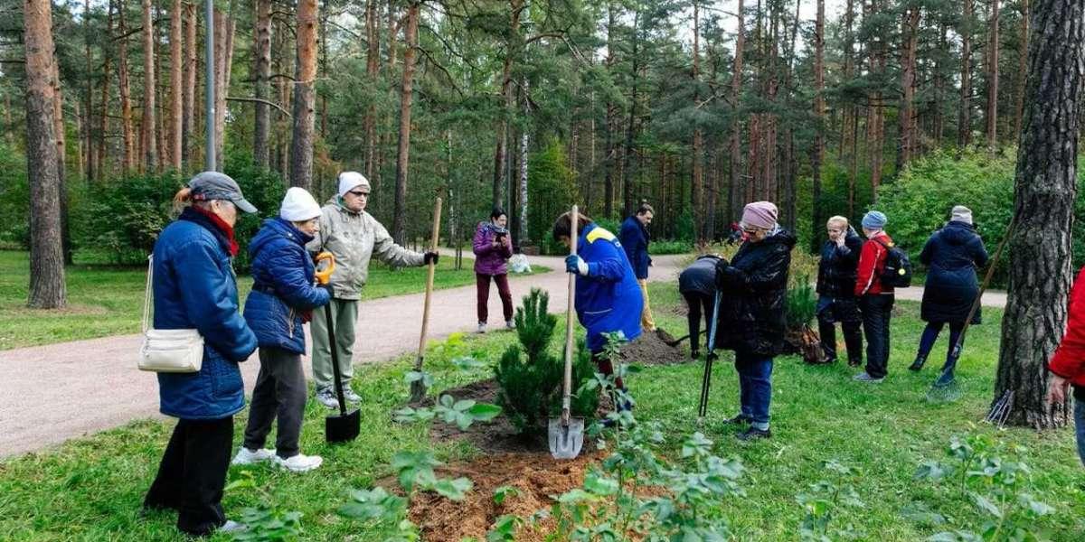 В Петербурге проходит осенняя акция по посадке деревьев